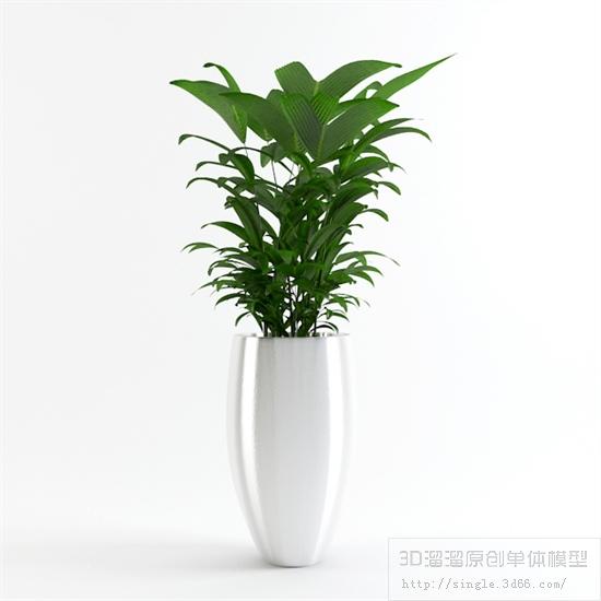 第11季《办公酒店植物篇》