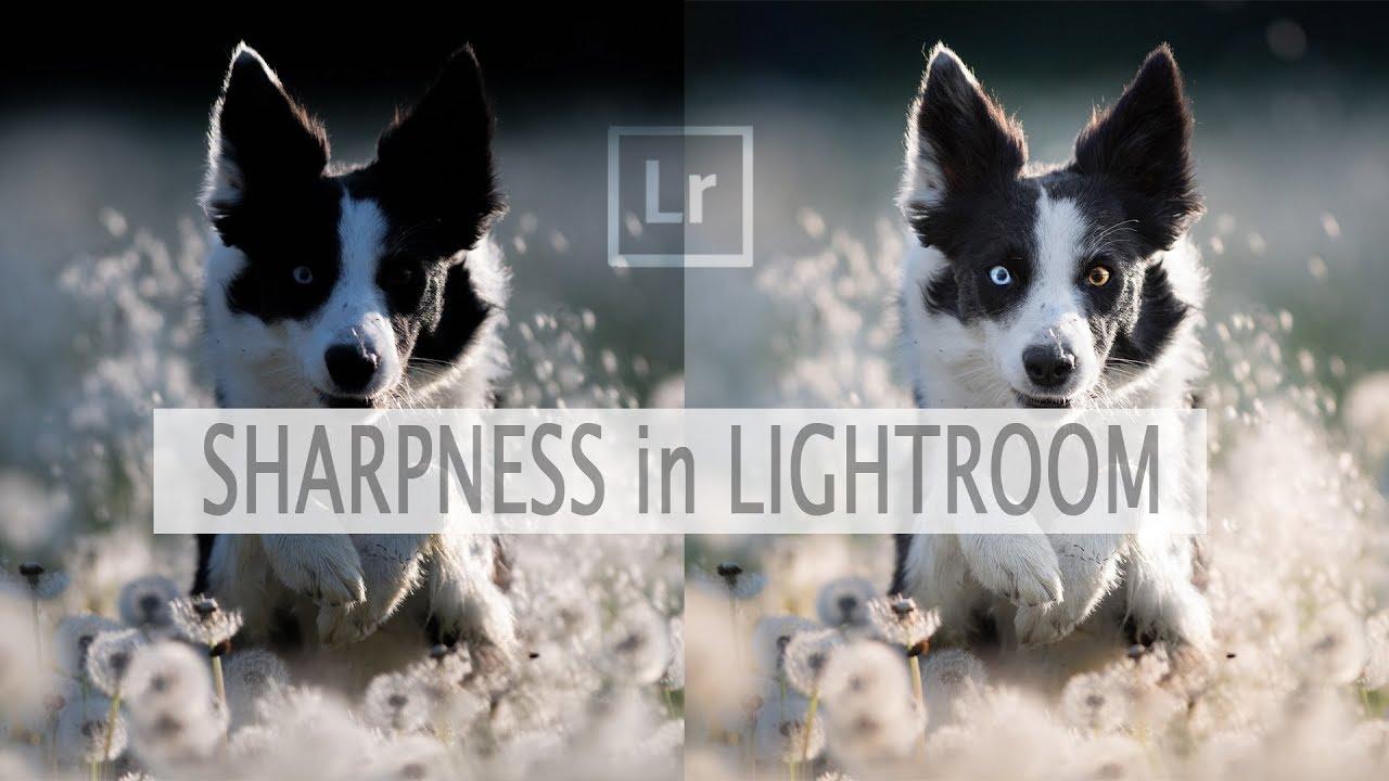 Lightroom照片锐化实例教程